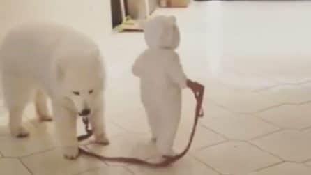 Un piccolo orso porta a spasso il proprio cane: la scena tenerissima