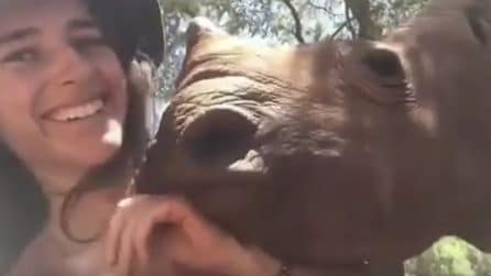 """Ray è un dolcissimo rinoceronte rimasto orfano: eccolo coccolare la sua nuova """"mamma"""""""