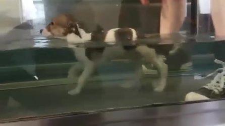 Non riesce a camminare: primi e piccoli passi per il cucciolo