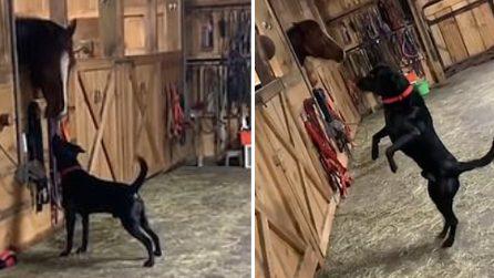 Cane incontra per la prima volta un cavallo: la reazione è stupenda