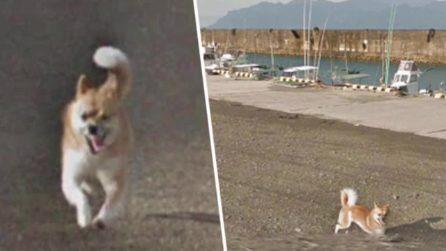 Il cane che rincorre la macchina di Google e diventa una star del web