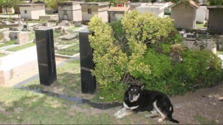 Il cane sparisce dopo la morte del padrone: i familiari lo ritrovano al cimitero vicino la sua tomba