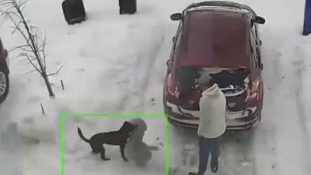 Il cane non si separa dal suo amico peluche: lo porta anche in macchina
