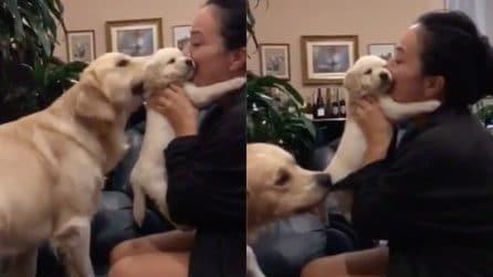 Rivuole il suo cucciolo a tutti i costi: la reazione della mamma è tenerissima