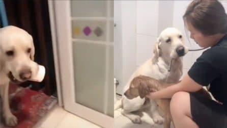 L'ora del bagnetto: il cane aiuta la padrona