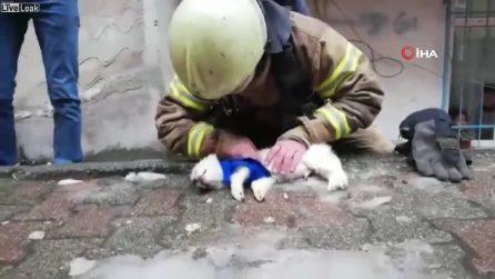 Cagnolino sembra ormai senza speranza: il vigile del fuoco lo salva facendogli il massaggio cardiaco