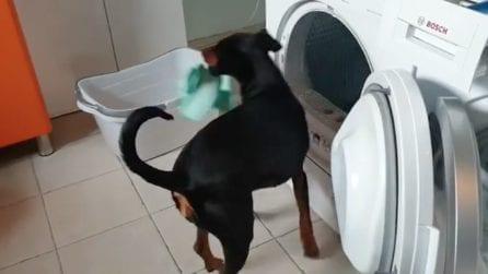 Aiuta la padrona a svuotare la lavatrice: la scena esilarante