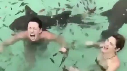 Bagno tra i pesci: le urla delle ragazze quando si avvicinano gli squali