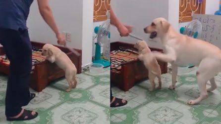 Il padrone fa finta di punire il cagnolino: la reazione del papà è commovente