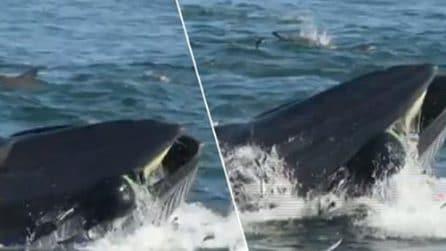 """Uomo inghiottito dalla balena viene """"risputato"""" fuori: le immagini incredibili"""