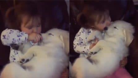 Il momento delle coccole: il cane più tenero che ci sia