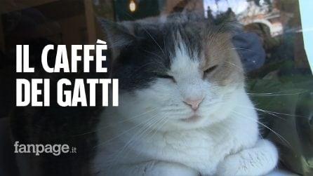 "Apre ""Gattò"", il cat bistrot per gli amici dei gatti."