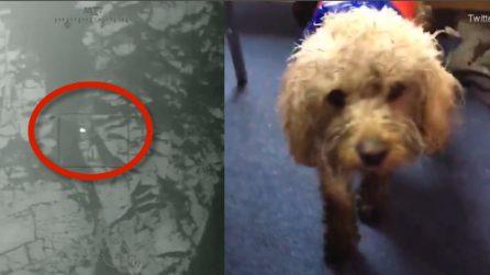 Cagnolino trascorre 48 ore al freddo: il momento emozionante in cui viene salvato