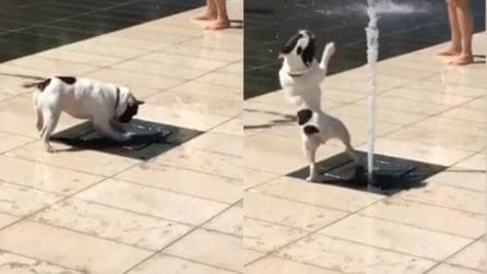 La fontana si accende all'improvviso: la reazione del cucciolo è esilarante