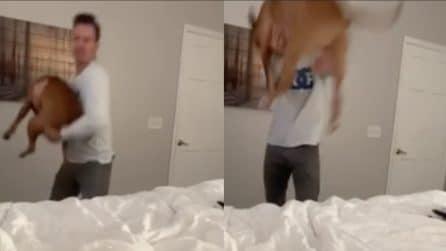 Lancia il cane sul letto: la reazione del cucciolo è immediata