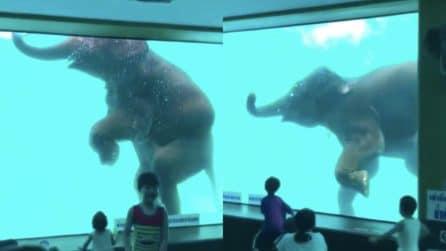 """L'elefante """"balla"""" davanti al gruppo di bambini: un momento stupendo"""