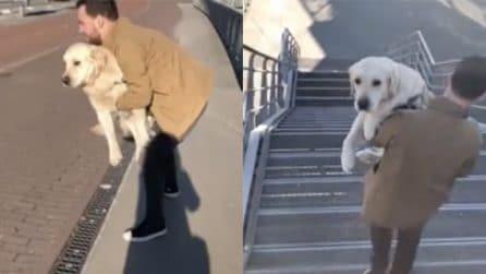 Il cane si è appena operato alla zampa: ecco cosa fa il suo padrone