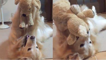 La padrona gli regala un nuovo peluche: la reazione del cane è tenerissima