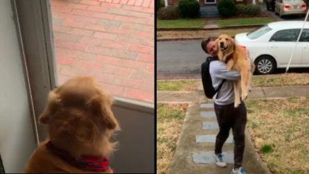 Il padrone è tornato a casa, la gioia del cane è incontenibile