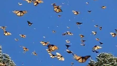 Le farfalle colorano il cielo azzurro: il meraviglioso slow motion