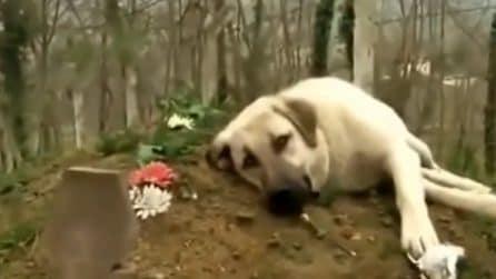 Non riesce a dirgli addio: ogni giorno si reca dov'è stato sepolto il suo amico