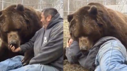 Jimbo è un bellissimo orso rimasto solo: all'orfanotrofio per animali si prendono cura di lui