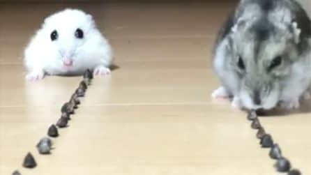 Mette i due criceti a mangiare, ma qualcosa non va come previsto