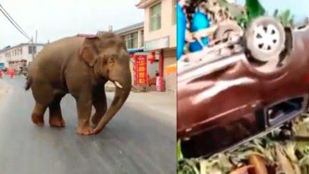 Elefante semina il terrore in città: distrugge tutto quello che ha davanti
