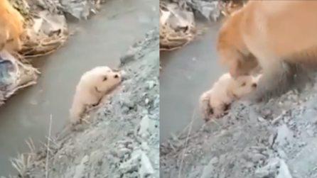 Il cagnolino non riesce a superare il fosso, mamma interviene subito in suo aiuto