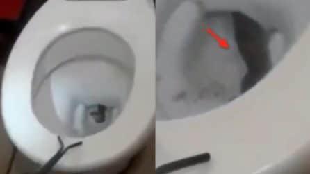 Sentono strani rumori provenire dal bagno: la scoperta agghiacciante