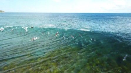 Fanno surf coi delfini: l'esperienza unica ed emozionante
