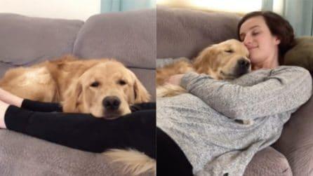 Si stendono insieme sul divano: un momento di puro relax per i cuccioli