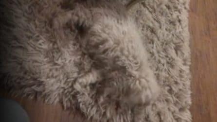 Nel tappeto si nasconde qualcosa: non riuscirete a trattenere le risate