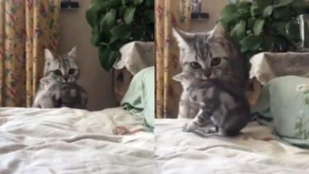 Prende il piccolo per il collo: la mamma mette a letto i suoi figli