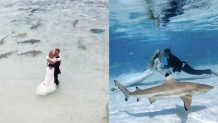 """Matrimonio in mezzo agli squali: il """"sì"""" più pazzesco di sempre"""
