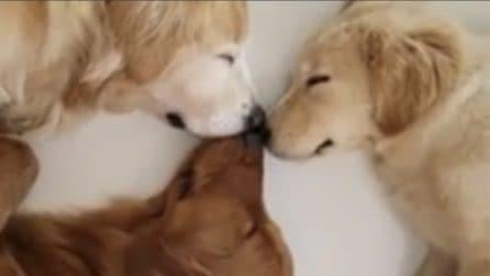 Torna a casa e trova i suoi cani che dormono: la scena esilarante