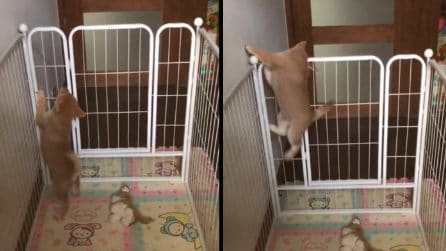 """Il cane evade dalla """"prigione"""": le tenerissime immagini"""