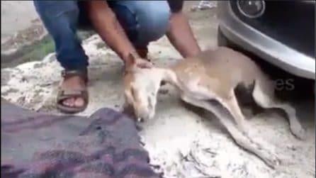 Lo trova in fin di vita sotto un'auto: un uomo dal cuore grande gli salva la vita