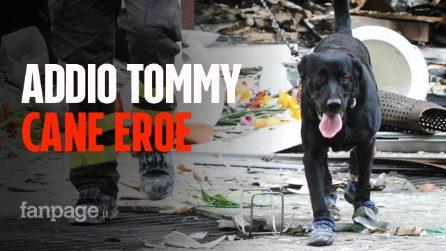 È morto Tommy, il cane eroe dei Vigili del Fuoco che salvò le vittime del terremoto dell'Aquila