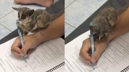 Vuole rendersi utile e aiuta il suo amico con i compiti