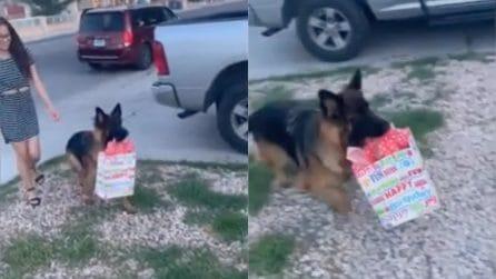 È il compleanno della sua padrona: il cucciolo le corre incontro con una sorpresa inaspettata