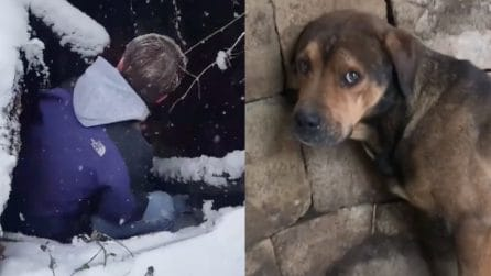 Lo trovano abbandonato in un pozzo: il povero cane rischia di morire di freddo