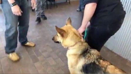 Viene rubato e strappato alla sua famiglia: dopo 2 anni il cane riabbraccia i vecchi padroni