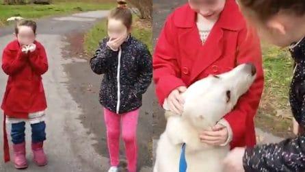 Rosie, il cane anziano salvato dal canile grazie all'amore di due sorelline
