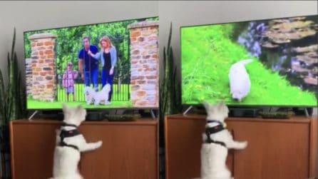Vede un cane in tv, la reazione del cucciolo è esilarante: non riuscirete a trattenere le risate