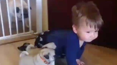 """I tre cuccioli e il bimbo iniziano la """"gara"""": sono stupendi"""