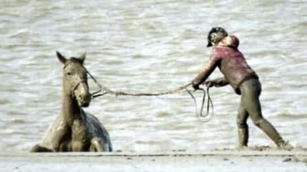 Cavallo resta bloccato nel fango durante un giro in spiaggia: le immagini del salvataggio