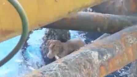 Notano qualcosa galleggiare in mare: il cane salvato dagli operai di una piattaforma petrolifera