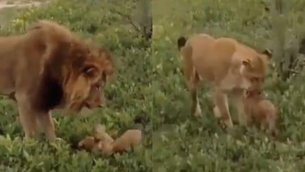 Gioca con il suo cucciolo, poi arriva la mamma: un momento emozionante