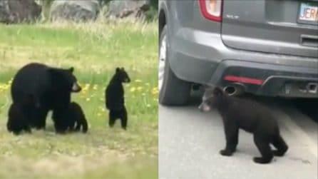 Li ritrova davanti all'auto: i piccoli attraversano la strada per raggiungere la mamma